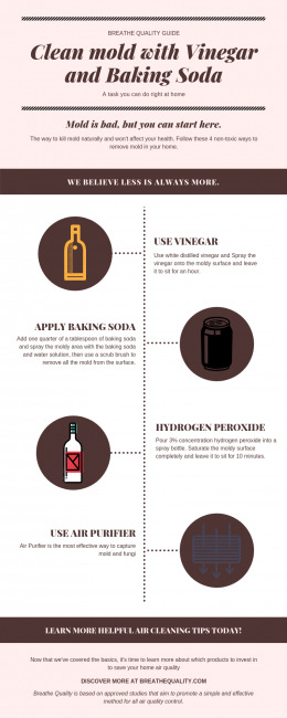 How to Clean Mold with Vinegar and Baking Soda (Infographic
